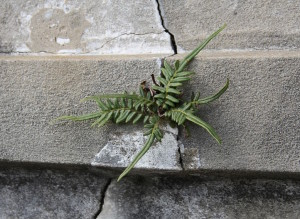 Plant_cracked_concrete2